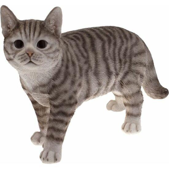 Cica Tigro 40cm